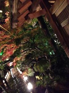 松島円通院ライトアップ
